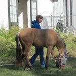 Baby Girl takes a walk at the Kesmarc Equine Sports Rehabilitation Center in Ocala.
