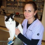 Dr. Candie Corriher, a student in the UF Maddie's Shelter Medicine Online Graduate Certificate program, at the Cat Adoption Team clinic, a cats-only shelter in Sherwood, Ore., where she serves at interim lead veterinarian. Corriher, who is deaf, is shown with an electronic stethoscope that patches into her cochlear implant.