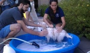 Students washing a dog at Project Heal dog and car wash.