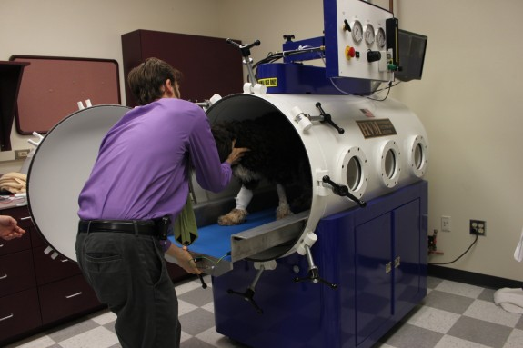 Dr. Shmalberg positions Jackie within the hyperbaric chamber on Oct. 15.