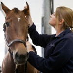 Dr. Sarah Reuss with horse