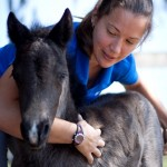 Dr. Amy Stieler with foal