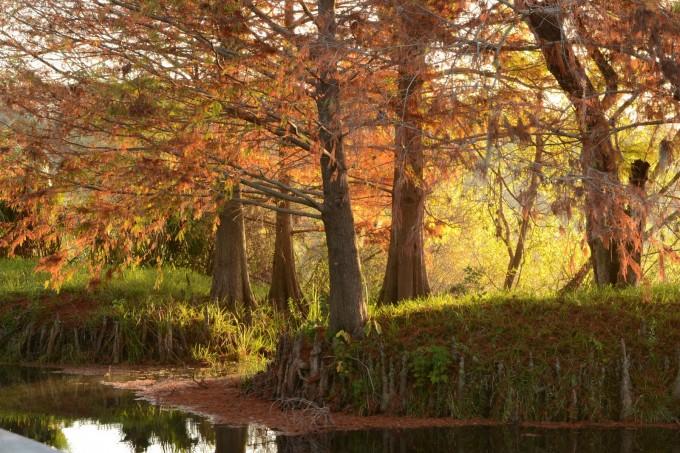 Lake Alice by Lori Waxenberg, Ph.D.