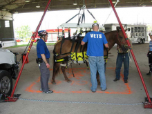 VETS team members work to connect the Anderson sling used in large animal rescue efforts.