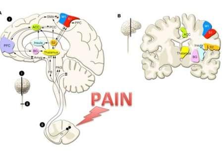 pain brain cruz