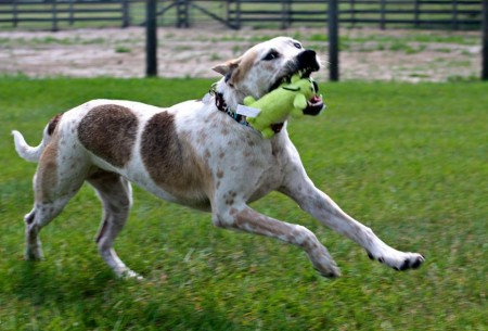 Learn to help shelter dogs and other homeless animals with shelter medicine distance learning