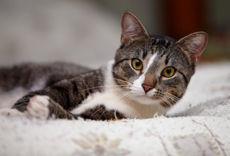 Portrait of a gray yellow-eyed cat. Striped cat. Striped not purebred kitten. Small predator. Small cat.